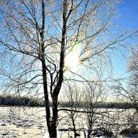 Солнце в феврале. :: Михаил Столяров