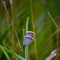 В траве... :: Nina Streapan