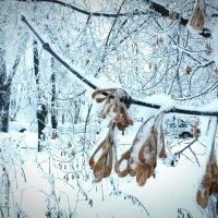 Зимние зарисовки :: Олег Денисов