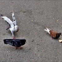 Не хлебом единым... :: Нина Корешкова