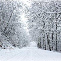 Первый снег :: Юлия Долгополова