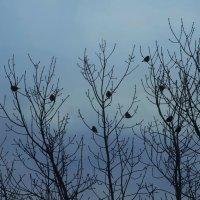 Ранние пташки :: Александр Подгорный