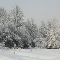 Зимушка-зима :: Лара (АГАТА)