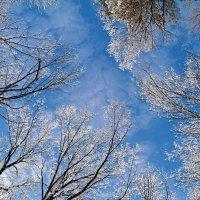 Про небо февраля.. :: Андрей Заломленков