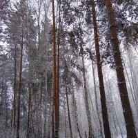 Стоит февраль, весны предвестник ... :: Татьяна Котельникова