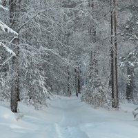 Зимушка-зима :: Татьяна Соловьева