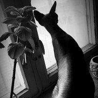 «... Жду март!» :: Арина Невская