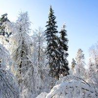 Зимнее спокойствие :: Андрей Снегерёв