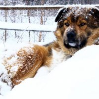 А снег идёт... :: Галина Полина