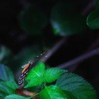 В тропическом лесу... :: Александр Вивчарик