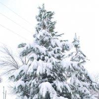 зимним утром... :: Юрий Владимирович
