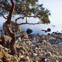 кусочек побережья между Балаклавой и мысом Айя :: viton