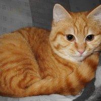 Мой любимый котейка... :: Людмила Богданова (Скачко)