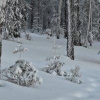 В январском лесу :: Татьяна Соловьева