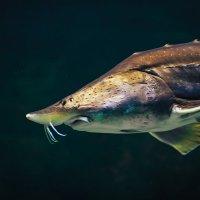 рыбёшка :: Игорь