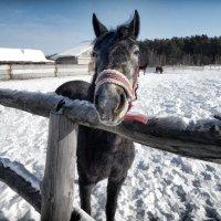 img_5471 :: Сергей Козлов