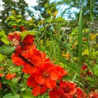 Цветы :: Александр Шишин