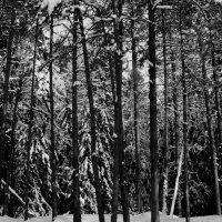 Черно-белая,Финляндия. :: Валентина Потулова