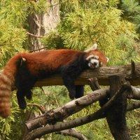 zoo :: MILA MILA