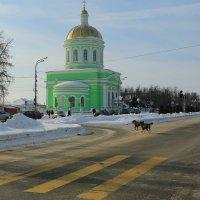 г.Озеры,и даже собаки там перебегают улицу по правилам :: ninell nikitina