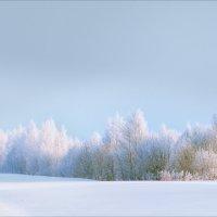 В зимних шубках... :: Александр Никитинский