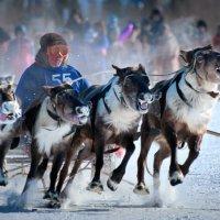 Гонки на оленях :: Gennadiy Litvinov