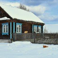 Мартовские красавцы... :: АЛЕКСАНДР СУВОРОВ