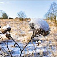 Зима. :: Валерия Комова