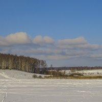 Березняк над прудом :: Сергей Цветков