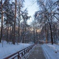 Утро в парке. :: Владимир Безбородов
