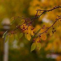 Осень. :: Эника.