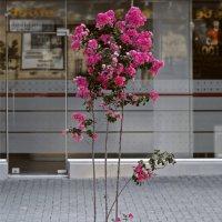 Городские цветы :: Сергей Григорьев