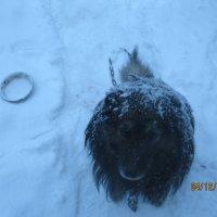 Снег кругом :: Smit Maikl