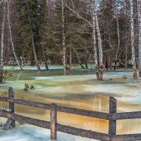Приближение весны в горном Алтае. :: Александр Поборчий