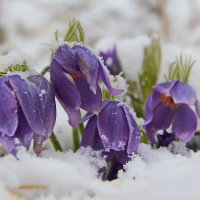 однажды весной... :: Александр