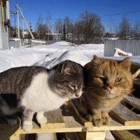 Сегодня праздник у котов!!! :: Паша