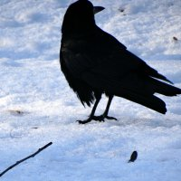 Чёрный-белый кадр... :: Тамара (st.tamara)