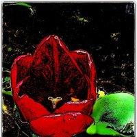 Душа тюльпана :: Нина Корешкова