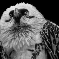 Бородач. Black and white :: Владимир Шадрин