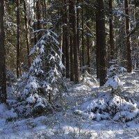Зимний лес :: Маргарита Батырева