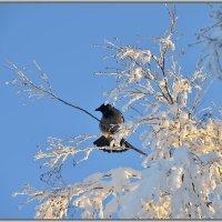 Вот и солнышко выглянуло :: Tatyana Nemchinova