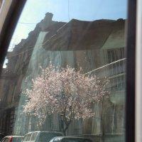 Весны отражение :: Наталья (D.Nat@lia)