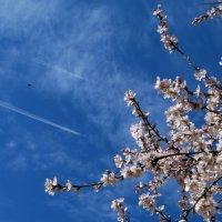 Долететь до весны :: Наталья (D.Nat@lia) Джикидзе (Берёзина)