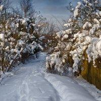 Зима выдалась и снежная, и морозная, и солнечная...! :: Ирина Шарапова