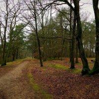 Очарование леса :: Nina Yudicheva