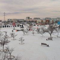 Снежное утро :: Анатолий Чикчирный