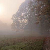 Утро туманное :: Alexander Andronik