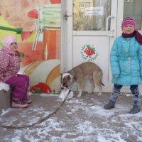 Снежный гламурный напиток для собаки!... :: Алекс Аро Аро