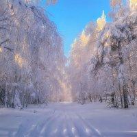 Снежная аллея :: vladimir Bormotov