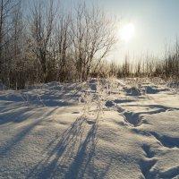Мороз и солнце :: Елена Перевозникова